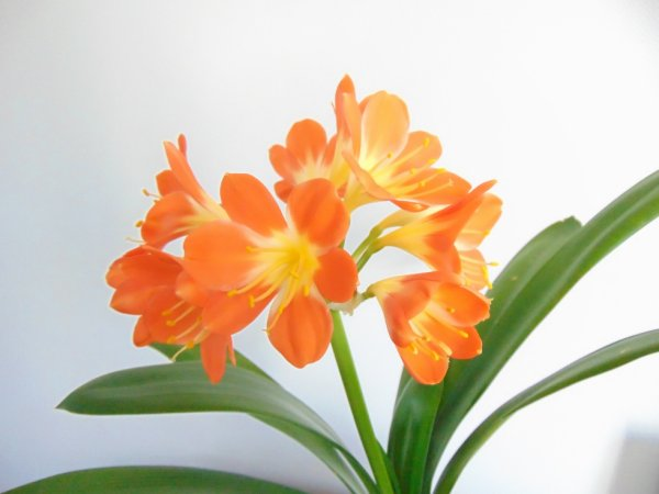 une fleur pour une fleur