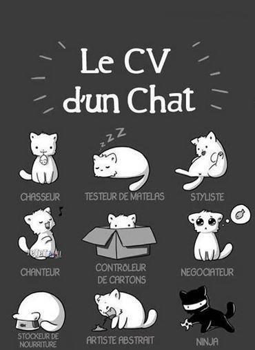 Cv d'un chat