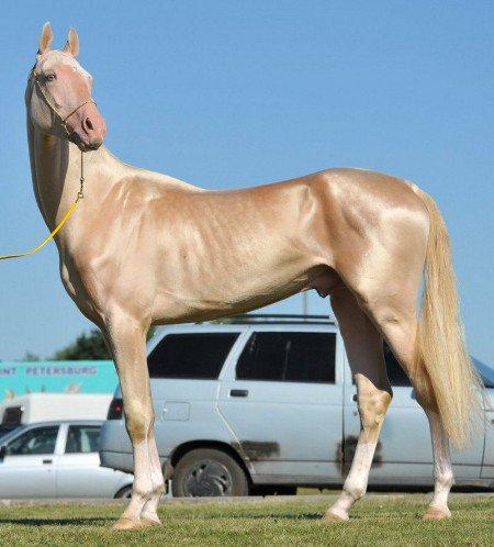 Le plus beau cheval du monde 2012