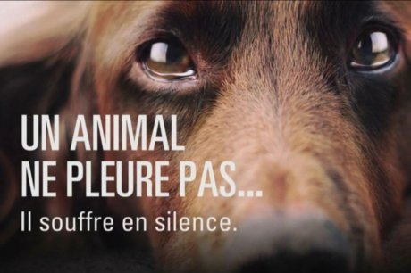 Animaux triste - Contre l'abandon !