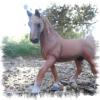centre-equestre-DGP-83