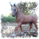 Photo de centre-equestre-DGP-83