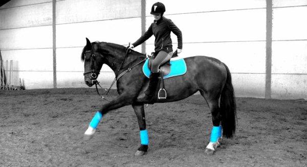 ---Un cheval pas comme les autres...Car celle-là, c'est la mienne!