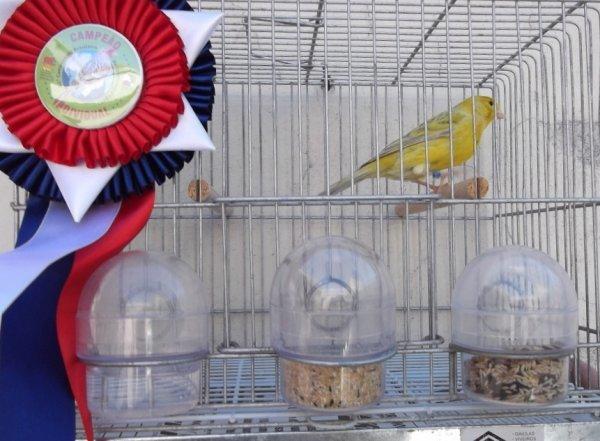 Ágata Pastel Amarelo Nevado - Campeão Brasileiro 2012 (90 Pts)