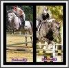 Mzelle-equitation