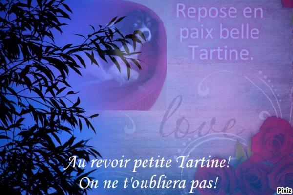 Dernier hommage à Tartine!