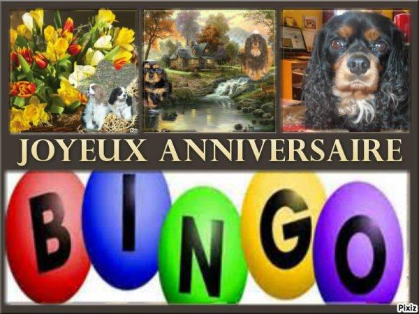 Joyeux anniversaire mon petit Bingo! Déjà 7 ans! <3