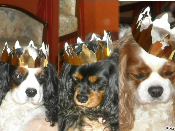 Aujourdhui on a fété les rois!
