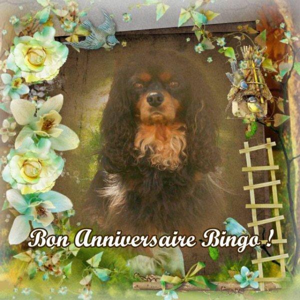 Bingo a eu 8 ans le 24 Septembre 2014!