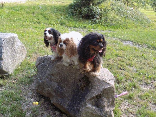 Nos vacances en Alsace Aout 2015