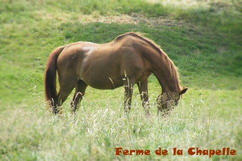 Blog de matos-equit-en-vente