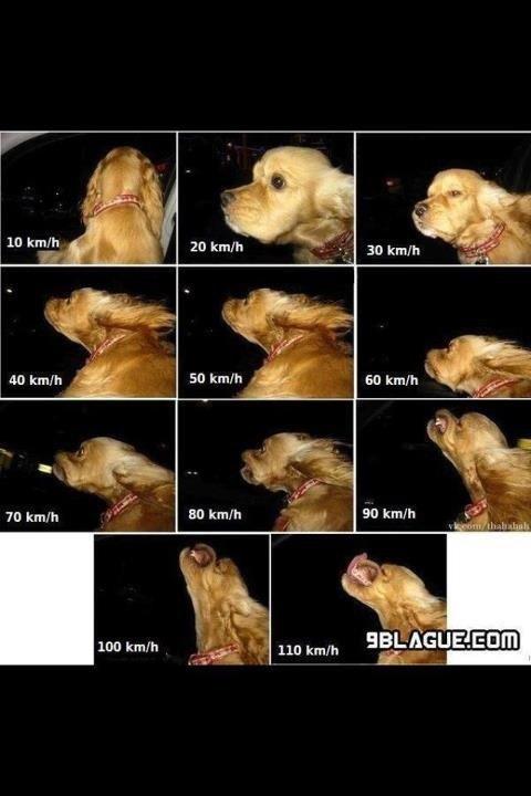 lennemi du chien:le vent