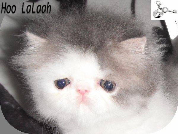 Hoo La Laah (5 semaines)