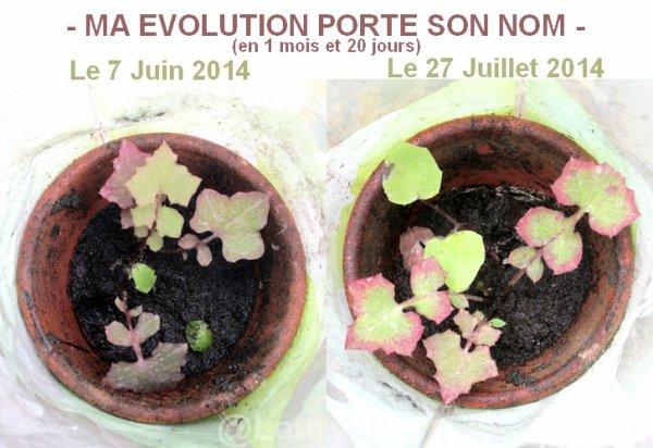- EVOLUTION DE MA PLANTE -