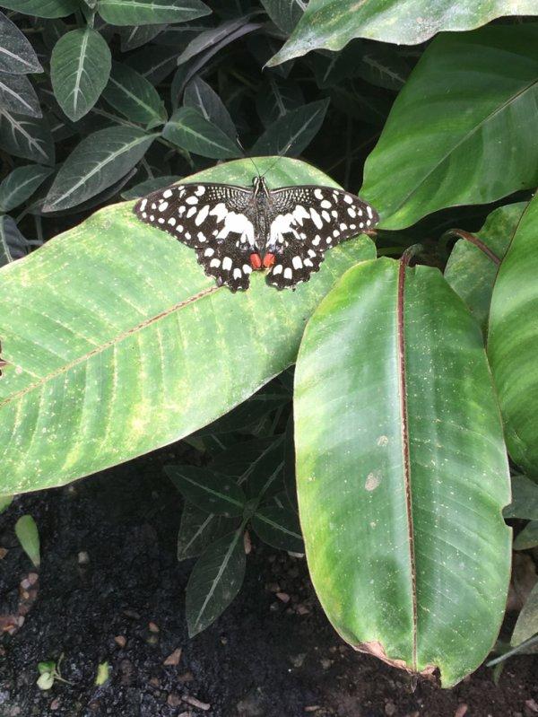 Natureospace à Honfleur