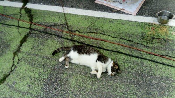 Un chat du cirque star circus