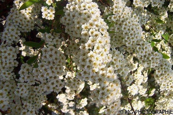 Végétation (forêt, fleur, plante).