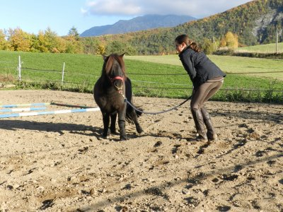 Cours du 22.10.2011 : Séance de cirque et d'éthologie !!! ( Pauline et Spirit)