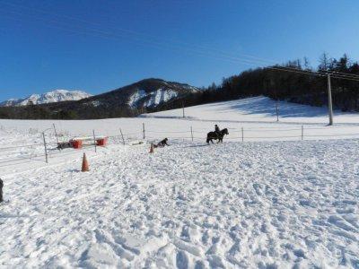 Photos ski joering et luge joering !!!