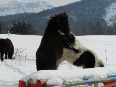 Les poneys sont sortis dans la neige !!!!