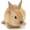 Rabbits-source