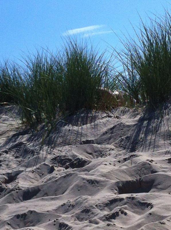 Hier dans les dunes .