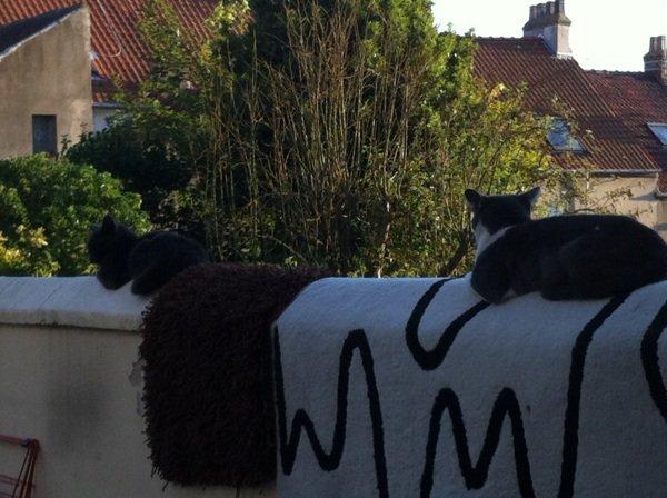 Les chats aussi se font bronzer