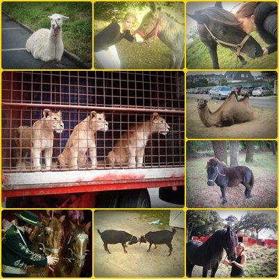 Quelque animaux de cirque rien que pour vous !! :)
