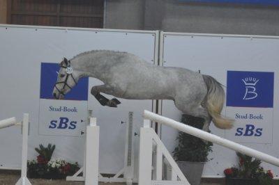Notre elevage de poneys connemara.