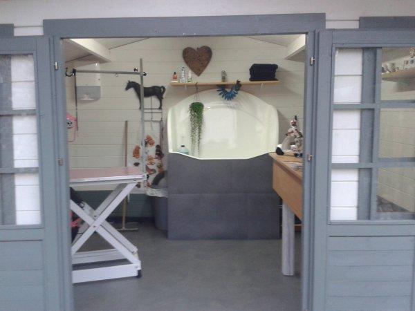 Ouverture de mon salon de toilettage pour chiens et chats for Salon toilettage chien