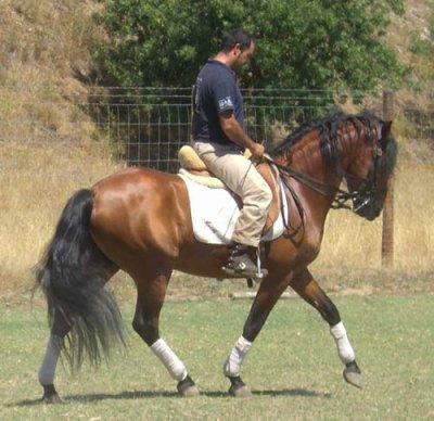 Zabumba au travaille ( cheval de mon pere ) .
