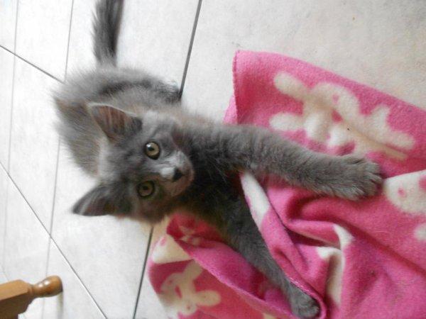 Mon deuxième chat titi <3