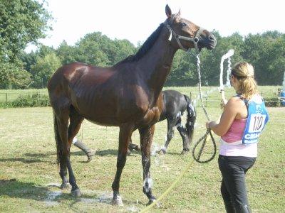 Un cheval parfait ♥
