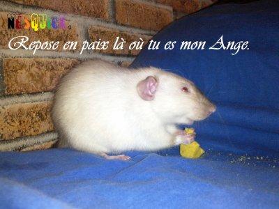Adieu Nesquick mon ange..