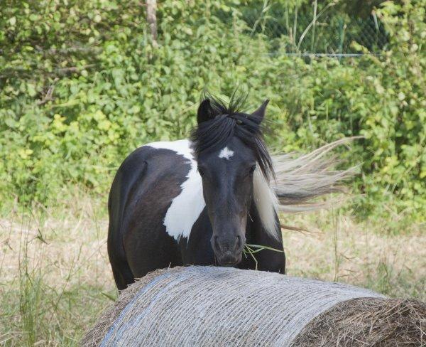 Depuis que mes chevaux sont près de moi, ma vie est comme dans un rêve <3