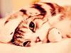 Adoption--aide-animaux