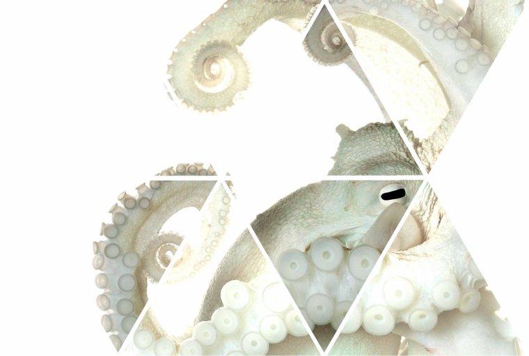 Kraken-sempaii
