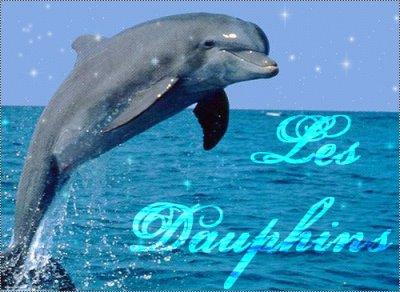 Mais qu'est - ce que le dauphin ???????