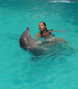 La vie sociale du dauphin ........