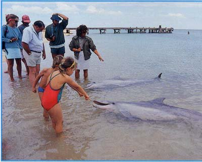 Les dauphins et les hommes .......