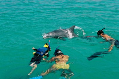 Le dauphin dans la culture .......