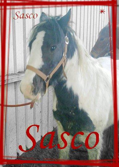 Sasco ♥ Sasco ♥ Sasco