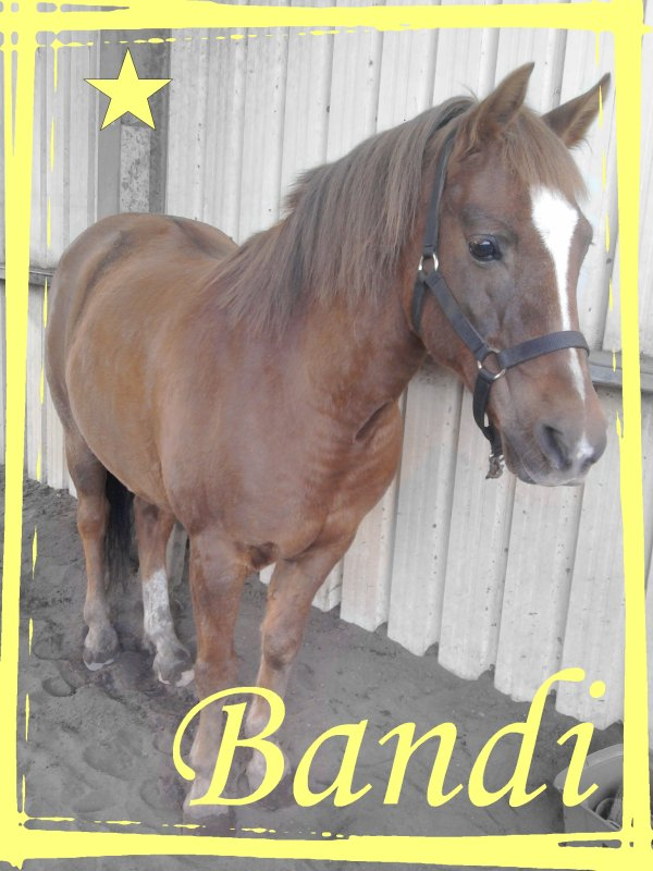 Bandi ♥ Bandi ♥ Bandi
