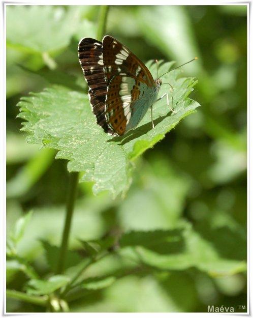 > Les proverbes ressemblent aux papillons ; on en attrape quelques-uns, les autres s'envolent. <