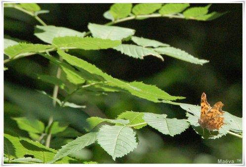 Même pour le simple envol d'un papillon tout le ciel est nécessaire !