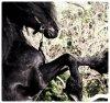 ♥ Car l'équitation est le seul sport individuel qui se pratique à deux. ❤