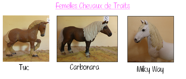 Chevaux de traits