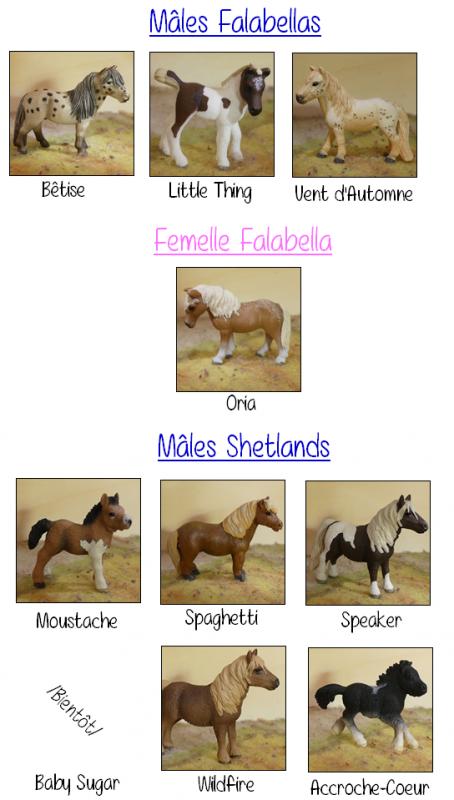 Falabella, Shetland et Mini-Shetland