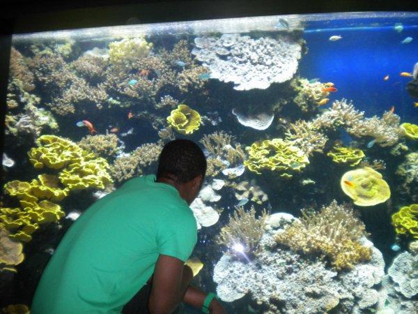 aquarium de monaco