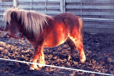Lui ?! C'est notre poney :)
